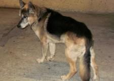 Donna morsa in strada da un cane a San Zaccaria. Denunciato il proprietario.