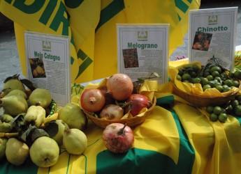 Casola Valsenio. Al via il secondo week-end della Festa dei frutti dimenticati e del marrone.