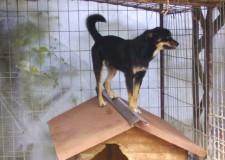 A breve un bando per incentivare l'adozione dei cuccioli ricoverati nei canili di Vallecchio e Rimini.