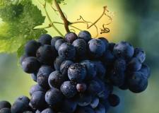 Italia & Mondo. In Germania si mantiene il primato dei vini italiani. Pronto il Simply Italian Great Wines di Monaco.