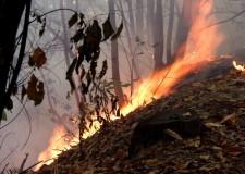 Resoconto incendi boschivi estate 2011: 54 in Emilia-Romagna. Colpevole anche il bel tempo.