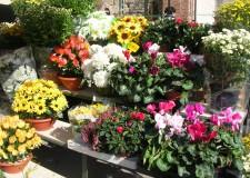 Ravenna. In Piazza del Popolo si è aperta 'Giardini&Terrazzi 2015 Verde Ravenna'. Una kermesse green per gli amanti delle piante e dei fiori.