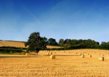 Area Vasta. Via al Tavolo verde congiunto per l'Agroalimentare.