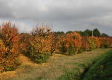 Emilia Romagna e Toscana con altre 7 regioni d'Europa. Pro-agricoltura