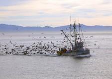 'Gente di Mare', anche nel settore marittimo serve più qualificazione professionale.