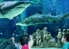 Presepi sott'acqua all'acquario di Cattolica