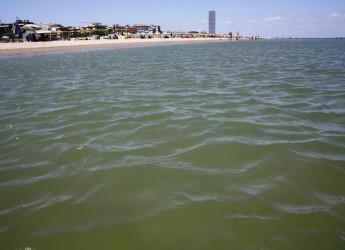 Una bella e sana acqua di mare. Daphne promuove l'Emilia Romagna