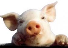 Italia. D'Agata (Sportello dei diritti): 'Il consumo di carne è probabilmente uno dei molti fattori che contribuiscono ad alti tassi di cancro intestinale'.