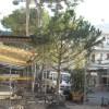 Riccione. L'amministrazione comunale ha incontrato i residenti della zona Alba. All'ordine del giorno: arredi, eventi turistici, parcheggi e viabilità.