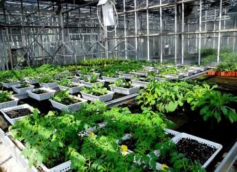 Piano di sviluppo rurale: altri 4 i milioni di euro per finanziare progetti per la ricerca nel settore agroalimentare.