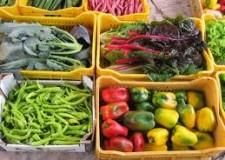 Italia&Tripla A. Scocca  il Rinascimento agroalimentare.