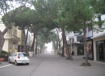 Riccione. Nota sui due pini abbattuti in viale Dante.