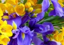 Fiori di Bach, fiori che curano mente e corpo.