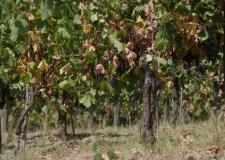 Siccità & agricoltura. I consiglieri provinciali di Pdl e Lega nord chiedono chiarimenti.