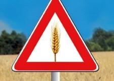 Celiachia. Una guida per l'alimentazione senza glutine. Nelle Usl dell'Emilia Romagna