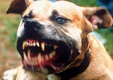 E' colpevole di omicidio il proprietario del pitbull che uccide una persona
