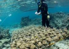 Mare Adriatico. Legambiente: armi chimiche ( oltre 30mila ) ancora in mare ?