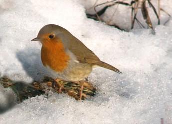 Briciole per gli uccelli. Un aiuto anche a loro, rimasti al freddo e al gelo