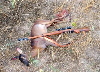 Forlì – Cesena, prorogata la sospensione della caccia di caprioli, daini e cervi.