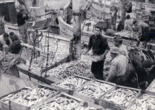 Emilia Romagna. Riconvertire la pesca in Adriatico. Per una pesca responsabile e sostenibile.