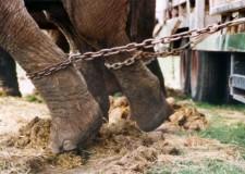 Animali sfruttati nel circo. La Grecia dice 'no' con un'iniziativa legislativa