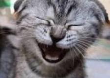 Perchè ridere fa bene?