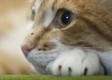 Festa del Gatto. Auguri a tutti i gatti del Mondo, campioni di coccole e di libertà.
