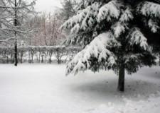 Pericolo neve. Rimozione di rami caduti o pericolanti in corso a Ravenna