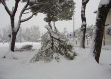 Pericolo caduta rami a causa del peso della neve. Parchi chiusi a Ravenna