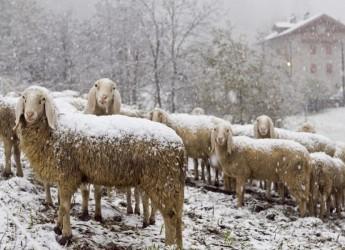 Emergenza neve. Animali feriti, veterinari al lavoro. Danni alle aziende zootecniche