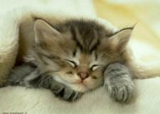 I gatti salvano il Pianeta? Sì, perchè furbi, simpatici, irresistibili.