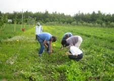 Biologico. 'Storico' accordo sull'agricoltura firmato a Norimberga tra Ue e Usa.