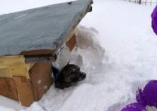 Non dimenticate gli animali al freddo e nella neve. L'appello dell'ENPA
