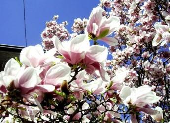 Fuori disgelo, dentro primavera! messaggi puliti e fiori biologici per le vie di Rimini.