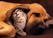 Fisco, Cani e gatti come beni di lusso? Continua l'iter dello spesometro.