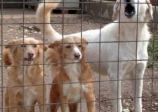 Cesena. I comuni cesenati rinnovano la convenzione per la gestione associata del canile e il contrasto al randagismo.