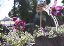 Riccione in fiore. Giardini d'autore. Mostra mercato di piante insolite e rarità botaniche.