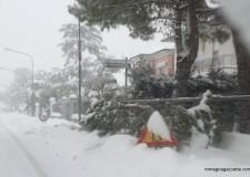 Danni neve, non lasciamo sole le imprese riminesi.