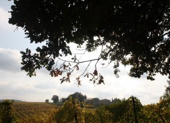 Emilia Romagna. Agricoltura Forlì-Cesena: oltre 1,8 milioni per lo sviluppo rurale.