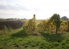Forlì-Cesena. Imu su fabbricati agricoli e deroga alla direttiva Bolkenstein in consiglio.