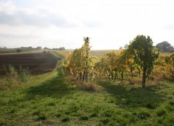 Faenza. Terreni agricoli all'asta via Salita di Oriolo, la gara si terrà il 19 ottobre a Palazzo Manfredi.