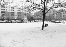 Ravenna. La gestione dell'emergenza neve in consiglio comunale.