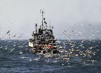 Salviamo la pesca! Riccione nel Gruppo di Azione Costiera delle Marinerie della Romagna.