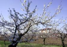 Emilia Romagna. 7,6 milioni a favore dell'ambiente e della mobilità ciclo pedonale.
