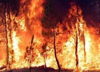Emilia Romagna: meno incendi boschivi. Rinnovata la convenzione con il Corpo forestale dello Stato.