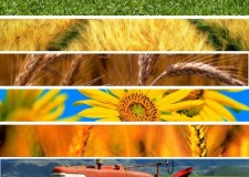 Rapporto agroalimentare in Emilia Romagna: risultati positivi ma calano gli utili.