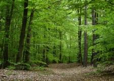 Bagno di Romagna. 'Festa degli alberi': sei ore di escursione nel verde.