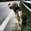 Incidente stradale causato da cani randagi: non c'è obbligo di risarcimento.