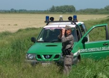 Emilia Romagna. Biodiversità animale e vegetale: l'azione della Forestale a Ravenna.