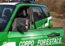 Terremoto Emilia Romagna, arrivano i mezzi speciali della Forestale